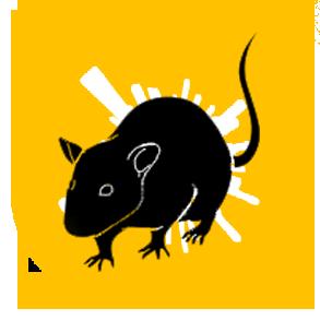 TMD Environnement - Rats